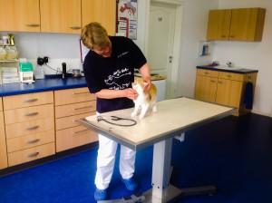 Unser geräumiger  Behandlungsraum ermöglicht streßfreien Umgang mit den Patienten, …